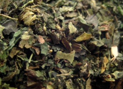 nettle loose leaf tea